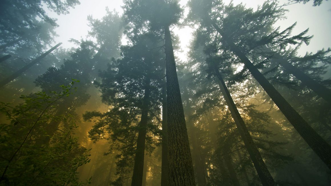 How Can the Wilderness Be a Gift? - Vaneetha Rendall Risner | indoubt